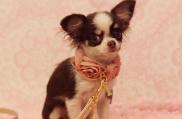 cachorros-toy-madrid